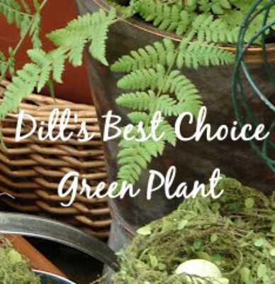 Dill's Best Choice Green Plant from Dill's Floral Haven, local florist in Belleville, IL