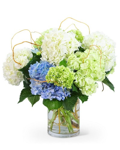 Hello, Hydrangea! from Dill's Floral Haven, local florist in Belleville, IL