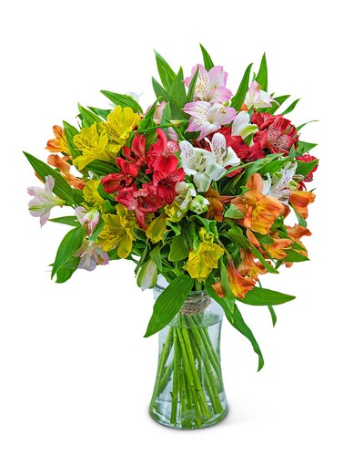 Cheerful Alstroemeria from Dill's Floral Haven, local florist in Belleville, IL
